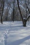 Μαγνητική χειμερινή σκηνή του δάσους που καλύπτεται με το νέο χιόνι στο πάρκο, Sofia Στοκ φωτογραφίες με δικαίωμα ελεύθερης χρήσης