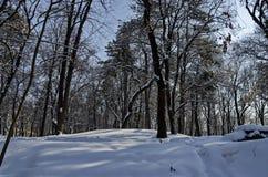 Μαγνητική χειμερινή σκηνή του δάσους που καλύπτεται με το νέο χιόνι στο πάρκο, Sofia Στοκ εικόνα με δικαίωμα ελεύθερης χρήσης