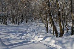 Μαγνητική χειμερινή σκηνή του δάσους που καλύπτεται με το νέο χιόνι στο πάρκο, Sofia Στοκ Φωτογραφίες
