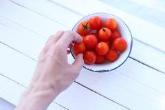 Μαζεψτε με το χέρι τις ντομάτες κερασιών Στοκ φωτογραφία με δικαίωμα ελεύθερης χρήσης