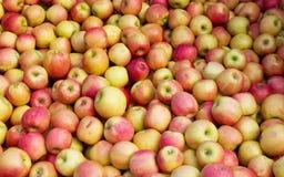Μαζικά μήλα Στοκ Εικόνες