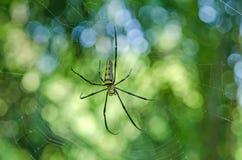 Μακριά αράχνη ποδιών Στοκ φωτογραφία με δικαίωμα ελεύθερης χρήσης