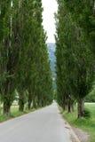 Μακριά εθνική οδός που οριοθετείται από τα μεγάλα παλαιά δέντρα λευκών Στοκ Εικόνες
