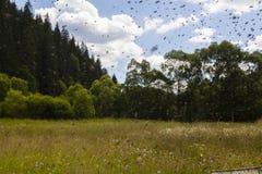 μακριά η οικογενειακή μύγα κατοικιών κλάδων μελισσών μελισσών που διαμορφώνεται κρεμά τα έντομα νέο χρονικό δέντρο σμήνων μερών q Στοκ εικόνα με δικαίωμα ελεύθερης χρήσης