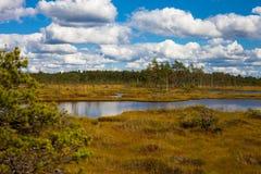 Μακριά λίμνη στο έλος Στοκ Εικόνα