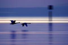 μακριά μύγα Στοκ φωτογραφίες με δικαίωμα ελεύθερης χρήσης