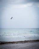 μακριά μύγα Στοκ Φωτογραφία