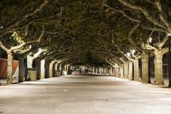 Μακριά οδός πορειών που ευθυγραμμίζεται με τα πράσινα δέντρα τη νύχτα στην Ισπανία Στοκ εικόνες με δικαίωμα ελεύθερης χρήσης