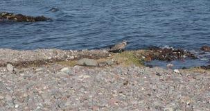 μακριά πετώντας seagull φιλμ μικρού μήκους
