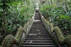 Μακριά σκαλοπάτια με κανένα στη μέση της ζούγκλας, σκαλοπάτια ναών στο δάσος Στοκ εικόνα με δικαίωμα ελεύθερης χρήσης