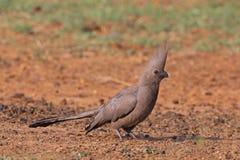 μακριά το πουλί πηγαίνει Στοκ εικόνες με δικαίωμα ελεύθερης χρήσης