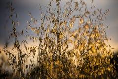 Μακριά χλόη στην ηλιοφάνεια Στοκ Φωτογραφίες