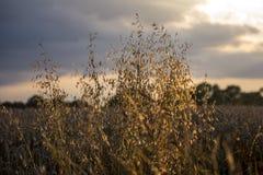 Μακριά χλόη στην ηλιοφάνεια Στοκ Εικόνες