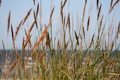 Μακριά χλόη στη θάλασσα παραλειπόμενων το καλοκαίρι στοκ εικόνα