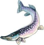 μακριά ψάριαα Απεικόνιση αποθεμάτων