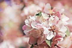 μακρινή τουλίπα άνοιξη εστίασης λουλουδιών ακρών ανασκόπησης Στοκ Εικόνα