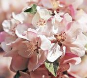μακρινή τουλίπα άνοιξη εστίασης λουλουδιών ακρών ανασκόπησης Στοκ Φωτογραφία