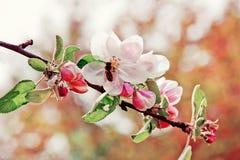 μακρινή τουλίπα άνοιξη εστίασης λουλουδιών ακρών ανασκόπησης Στοκ Εικόνες