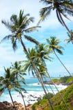 Μακριοί λεπτοί φοίνικες πέρα από την ακτή του ωκεανού ζωηρόχρωμο τοπίο της Ασίας τροπικός μπλε ουρανός εγκαταστάσεων στοκ εικόνες
