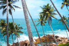 Μακριοί λεπτοί φοίνικες πέρα από την ακτή του ωκεανού ζωηρόχρωμο τοπίο της Ασίας τροπικός μπλε ουρανός εγκαταστάσεων στοκ φωτογραφίες με δικαίωμα ελεύθερης χρήσης