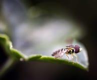 μακροεντολή άδειας μελισσών μικροσκοπική στοκ εικόνες