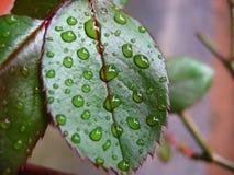 μακροεντολή ημέρας βροχ&epsi Στοκ Φωτογραφία