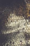 Μακροεντολή κλιμάκων ψαριών Στοκ φωτογραφία με δικαίωμα ελεύθερης χρήσης