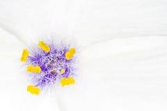 μακροεντολή λουλουδ&i Στοκ Φωτογραφία