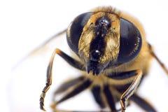 μακροεντολή μελισσών στοκ φωτογραφία