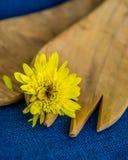 Μακροεντολή του κίτρινου λουλουδιού στο ξύλινο δίκρανο στοκ εικόνα με δικαίωμα ελεύθερης χρήσης