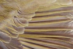 μακροεντολή φτερών πουλιών Στοκ φωτογραφίες με δικαίωμα ελεύθερης χρήσης