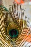 Μακροεντολή φτερών Peacock Στοκ φωτογραφίες με δικαίωμα ελεύθερης χρήσης