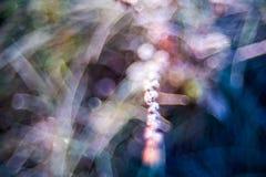 Μακροεντολή φύσης και bokeh Στοκ Εικόνες