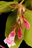 μακροεντολή 2 λουλουδ Στοκ εικόνες με δικαίωμα ελεύθερης χρήσης