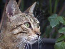 Μακροεντολή γατών Στοκ εικόνα με δικαίωμα ελεύθερης χρήσης