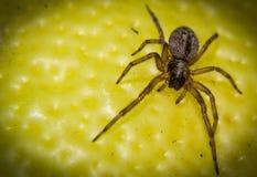 Μακροεντολή μιας αράχνης Στοκ φωτογραφία με δικαίωμα ελεύθερης χρήσης