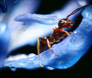 Μακροεντολή μυρμηγκιών στοκ φωτογραφίες