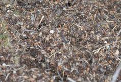 Μακροεντολή μυρμηγκοφωλιών Στοκ εικόνες με δικαίωμα ελεύθερης χρήσης