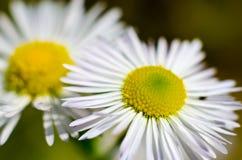 Μακροεντολή λουλουδιών Στοκ εικόνες με δικαίωμα ελεύθερης χρήσης