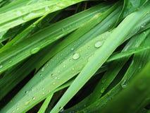 Μακροεντολή πράσινα φύλλα υγρά Στοκ Φωτογραφία