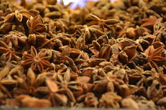 Μακροεντολή σπόρων γλυκάνισου αστεριών Στοκ φωτογραφία με δικαίωμα ελεύθερης χρήσης