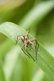 Μακροεντολή της αράχνης Στοκ εικόνες με δικαίωμα ελεύθερης χρήσης