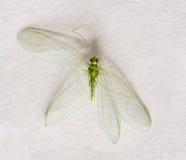 Μακροεντολή της πράσινης μύγας Στοκ Φωτογραφία