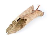 Μακροεντολή του καφετιού ξηρού φύλλου που απομονώνεται Στοκ φωτογραφία με δικαίωμα ελεύθερης χρήσης