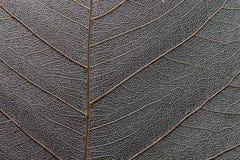 Μακροεντολή του ξηρού φύλλου στοκ φωτογραφία με δικαίωμα ελεύθερης χρήσης