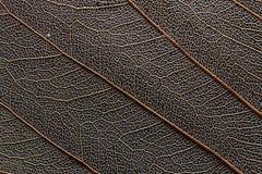 Μακροεντολή του ξηρού φύλλου στοκ εικόνες με δικαίωμα ελεύθερης χρήσης