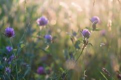 Μακροεντολή του πορφυρού λουλουδιού Στοκ φωτογραφία με δικαίωμα ελεύθερης χρήσης