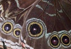 Μακροεντολή του φτερού πεταλούδων με ένα σχέδιο ματιών Στοκ Εικόνα