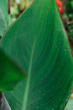 Μακροεντολή του φύλλου δαπέδων τζακιού και της δροσιάς πτώσης, Στοκ Φωτογραφία