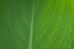 Μακροεντολή του φύλλου δαπέδων τζακιού και της δροσιάς πτώσης, Στοκ Εικόνες